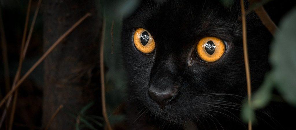 black, cat, orange