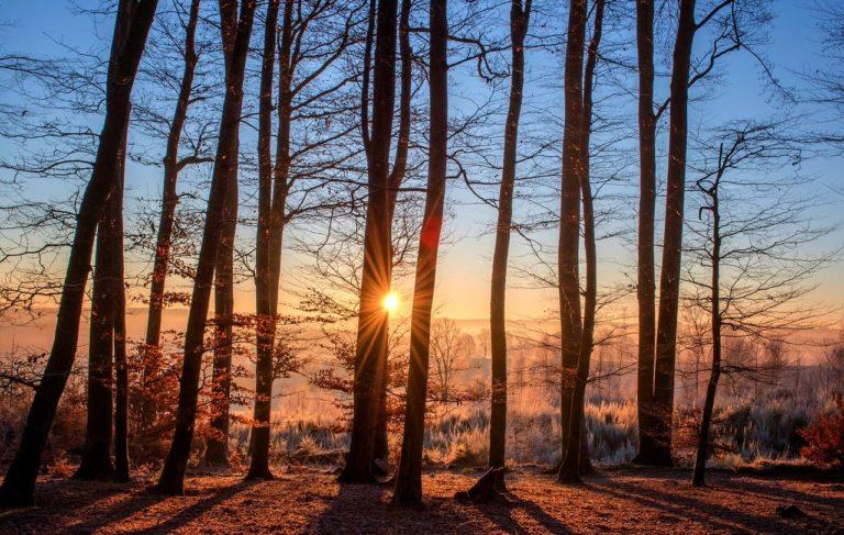 forest, landscape, sun