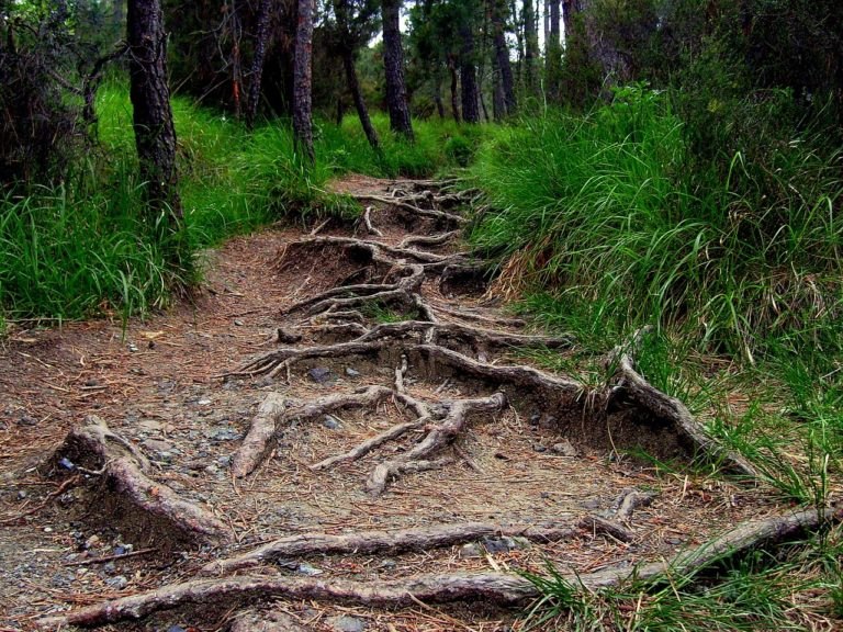 roots, forest, road