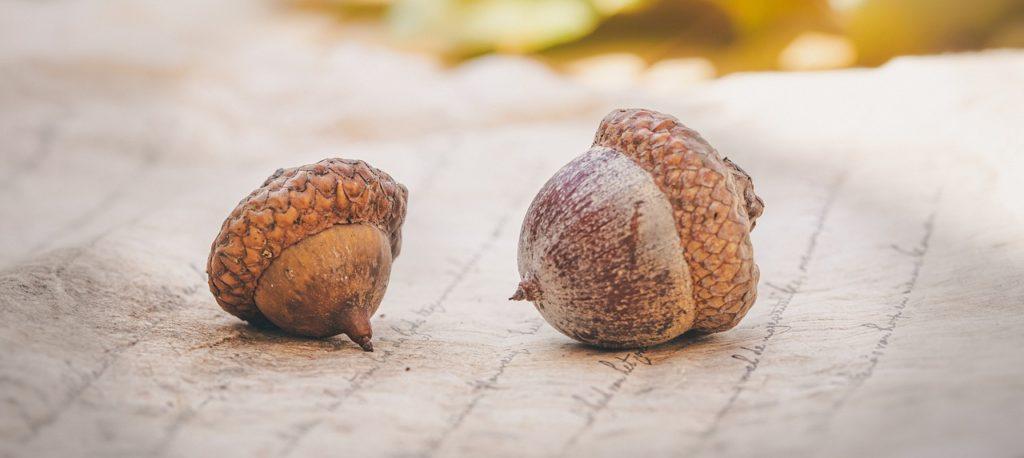 acorns, autumn, leaves-4572674.jpg